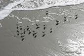 Birds At The Shoreline