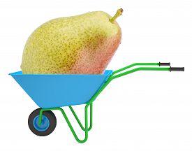 image of hand-barrow  - Pear in hand - JPG