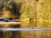 Frosty Riverbank  Deveron Riverc