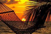 Palm Hammock And Sunset