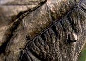 pic of tobaco leaf  - leaf of tobaco like plant - JPG