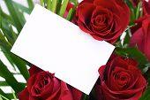 Red Rose 9