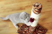 Cute cat sharpening claws on scratching post poster