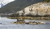 Seals Resting On Rocks Near Skagway Alaska