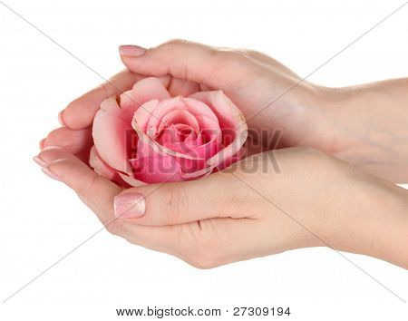Pink rose with hands on