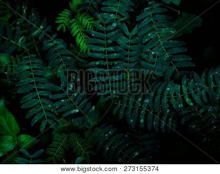 Natural Background Green From Nature