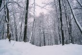 Winter Forest Landscape With Snowy Winter Trees Along The Winter Park - Winter Snowy Forest Scene In poster