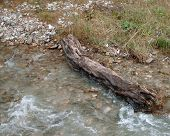 Wood In A River
