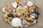 picture of sanddollar  - Seashells on sand - JPG