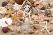 stock photo of sanddollar  - Seashell background - JPG