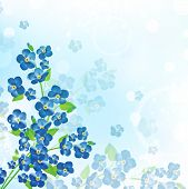 Forget-me-not Flower Background