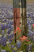 image of texas flag  - Field of Bluebonnets in a Texas field with a Texas flag superimposed on a barbed wire fence post - JPG