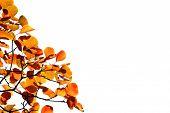 Herbst Laub mit Niederlassungen auf der weißen