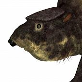 Glyptodont Mammal Head 3d Illustration - Glyptodont Was A Herbivorous Mammal That Lived In North Ame poster
