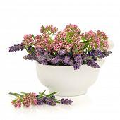 Valeriaan en lavendel kruid bloemen in een porseleinen mortier met stamper geïsoleerd op witte achtergrond