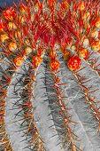 Cactuses in Lanzarote island Spain