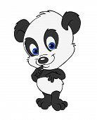 Cute Baby Panda Bear