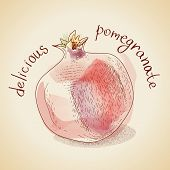 Vector illustration of vintage pomegranate