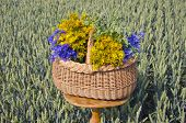 Midsummer Time Various Medical Herbs Wicker Basket