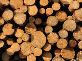 Background of sawn timber,  lit morning sun