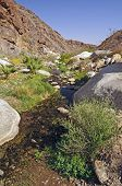 stock photo of anza  - Palm Canyon Creek in Anza - JPG