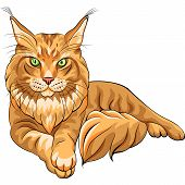 Vector Color Sketch Fluffy Maine Coon Cat