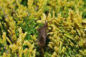 Bug In The Bush