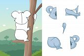 picture of koala  - A vector illustration of koala animal puzzle - JPG