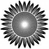 Sun Flower Silhouette Vector.eps