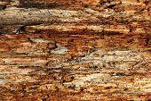 Texture Of Wood Grain