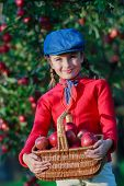 Apple orchard - Young girl picking red apples into the basket