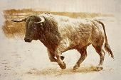 Pencil drawing on a linen of a brave bull to the gallop in a bullfight, Spain