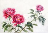 Three Peonies