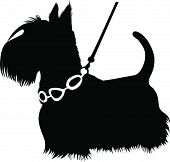 dogs animal a Scottish Terrier