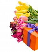 gift box with colorful  tulips