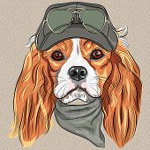 picture of khakis  - Hipster red dog Cavalier King Charles Spaniel breed in cap and cravat khakis and glasses - JPG