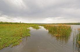 stock photo of marshlands  - Marshland on the Victoria Nile in Uganda - JPG