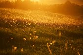 Beautiful Meadow With Grass In The Evening Sun