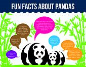 Fun Facts About Pandas. Flat Infographic Vector