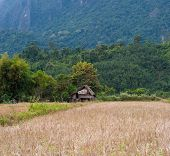 Rural Laos. Panoramic view of rice field and green hills. Beautiful nature of Lao