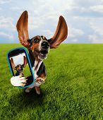 a cute basset hound running in the grass taking a selfie on a cell phone