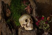 Still Life With A Human Skull With Desert Plants, Cactus, Roses And Dried Flowers.