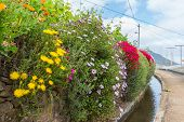 Flowers Along A Levada Irrigation Canal At Madeira Island, Portugal
