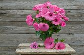 Fresh Garden Pink Petunia Bouquet In Vase On Wooden Table
