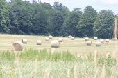 Hay Bales (Round) in Field