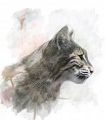 Watercolor Digital Painting Of Bobcat