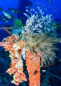 Colorful feather stars on a wreck