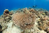 Clear Water And Corals - Sipadan Barrier Reef