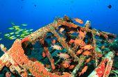 Shoals of fish around an underwater wreck