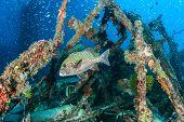 Tropical fish around a shipwreck